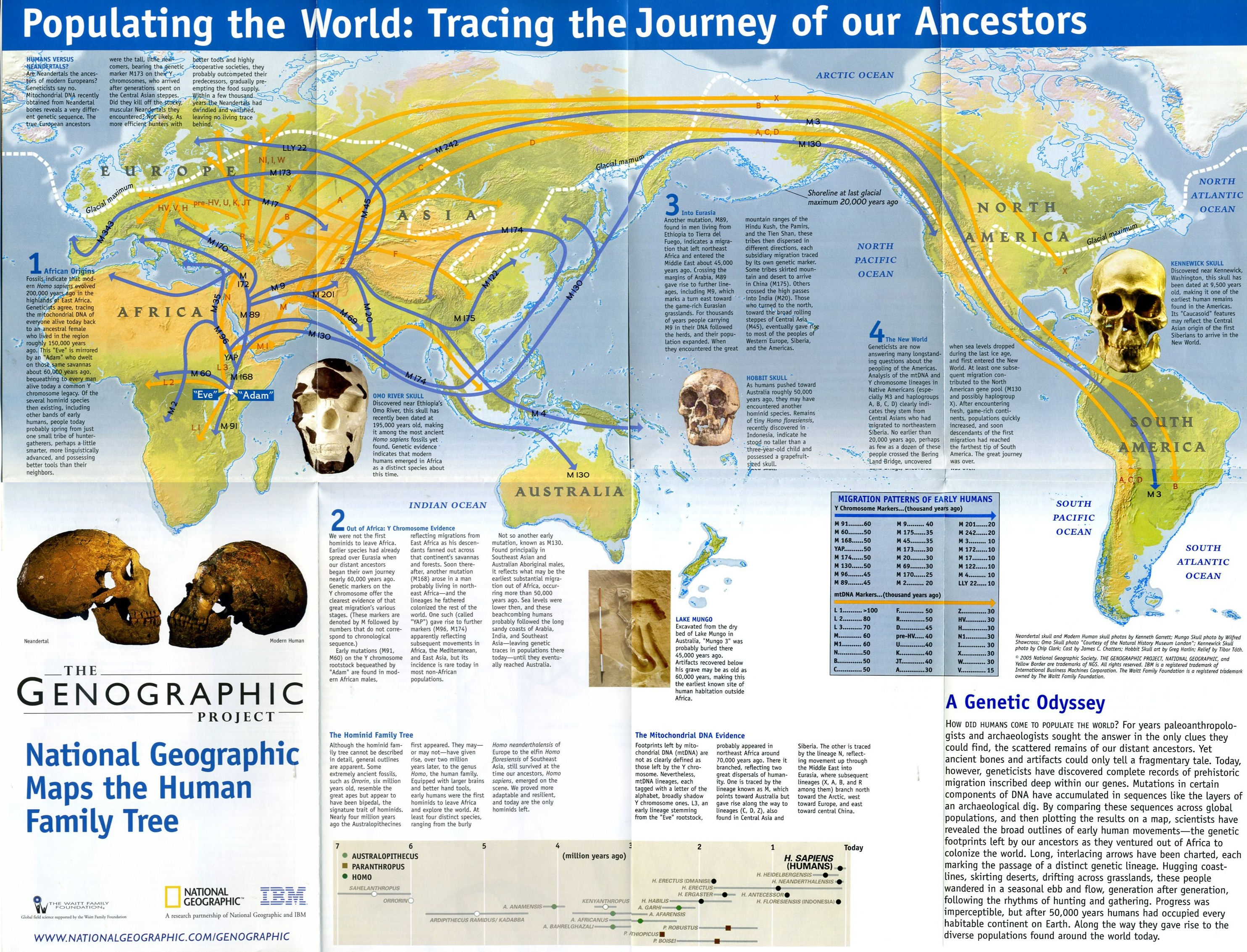 As part of the Genographic Project, National Geographic Education is working to help teachers like you work across disciplines to instruct students about the ancient migratory history of the human species. Using the science of DNA, the Genographic Project will help students answer questions like.